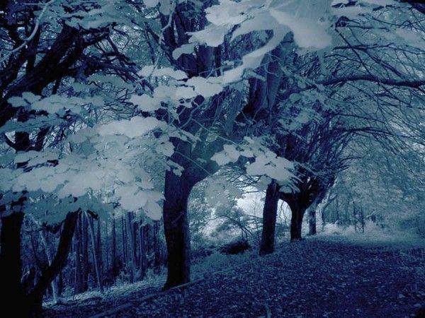 Fond d ecran paysage hiver for Fond ecran hiver animaux